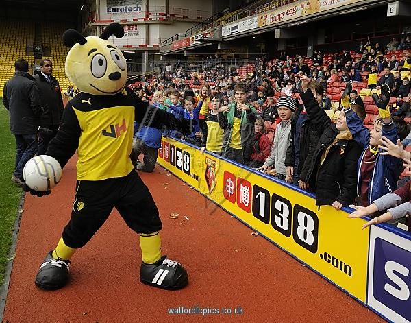 The Watford Bee in action